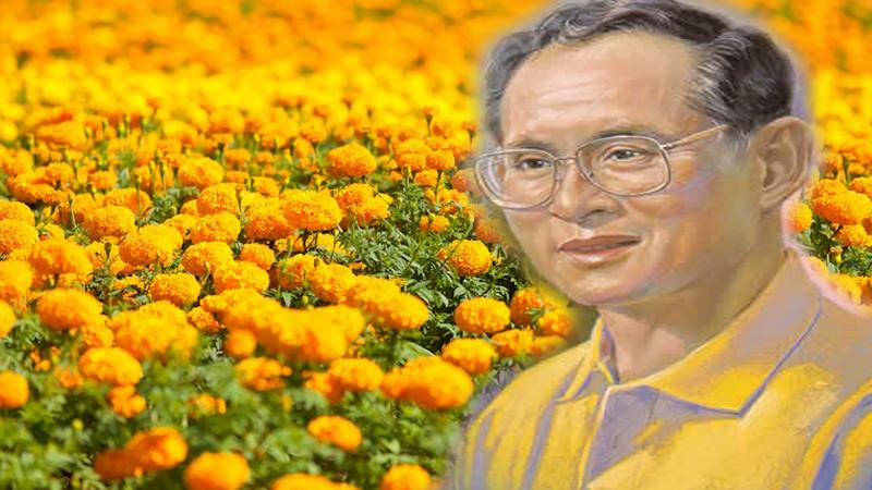 จังหวัดตาก ขอเชิญชวนประชาชนทุกหมู่เหล่าปลูกดอกดาวเรือง หรือดอกไม้สีเหลือง ในช่วงพระราชพิธีถวายพระเพลิงพระบรมศพ พระบาทสมเด็จพระปรมินทรมหาภูมิพลอดุลยเดช เพื่อแสดงความจงรักภักดีและน้อมสำนึกในพระมหากรุณาธิคุณเป็นล้นพ้นหาที่สุดมิได้
